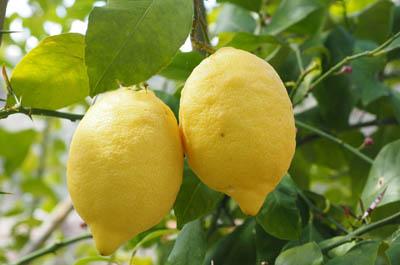 Limonenschale